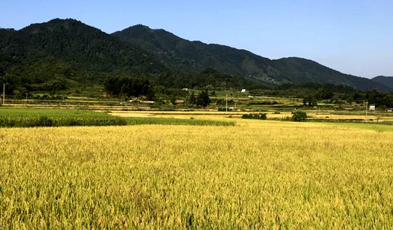 稻香,蟹肥,生態美 種養結合的Double效益價碼足