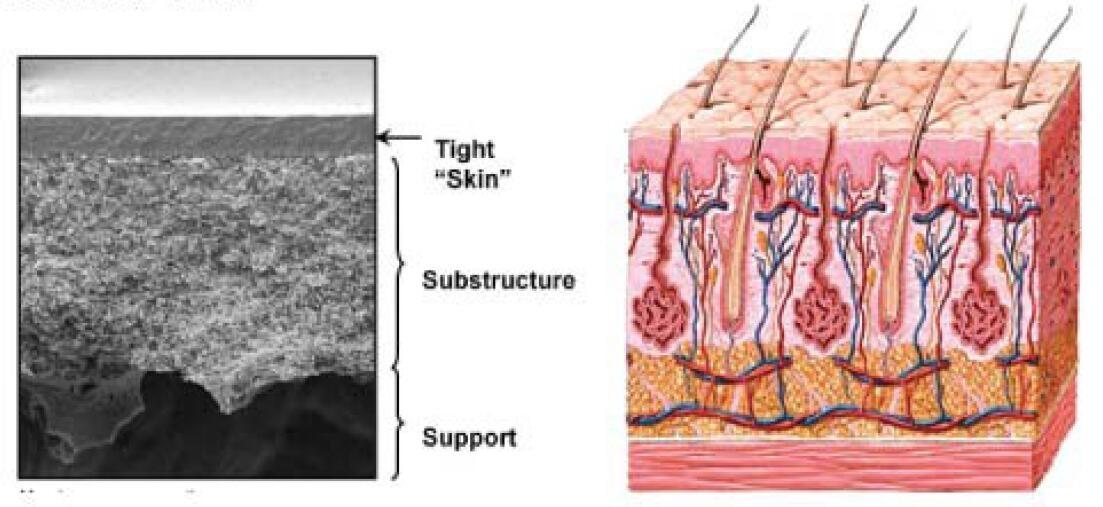 Strat-M Membrane分层结构